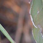 bird of paradise leaf by Anne koufos