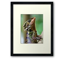 Dragon of the Daintree Framed Print