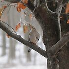 Mourning Dove by amyklein196203