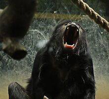 My, what big teeth you have... by Ryan Davison Crisp