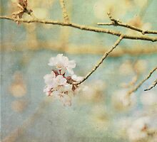 Spring 1 by eyeshoot