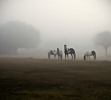 Misty Horses by carlosramos