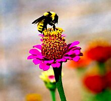Bumble Bee by Jim Terry
