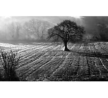 FivemilebridgeTree Photographic Print
