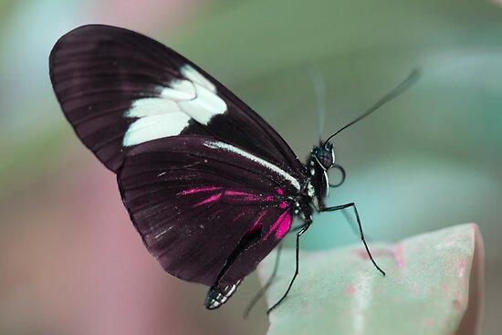 Butterfly by Belle Farley