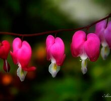 Family of Bleeding Hearts by Alana Ranney