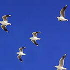 Coast Gulls by ShotsOfLove