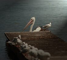 pelican light by kellimage