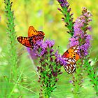 Butterfly Duo by Catherine  Howell