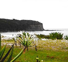 Coastal Greenery by shanemac