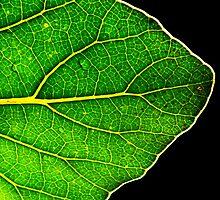 A New Leaf by Robyn Carter