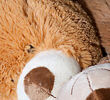 Snuggle Bear Faces by Doug Greenwald