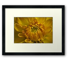 All Yellow Framed Print