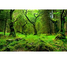 The Heart Of The Forest Photographic Print