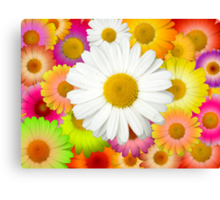 Great Camomile Field Canvas Print