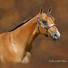 Buckskin Beauty by ibgraffix