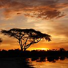 Okavango Delta sunset by Sharon Bishop
