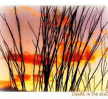 Clouds in the Ocotillo by Terry Temple