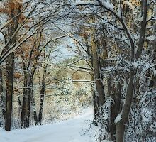 Powder by enchantedImages