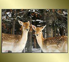 Aren't We Beautiful?! :) by TerriRiver