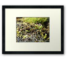 Regeneration- Otways National Park Framed Print