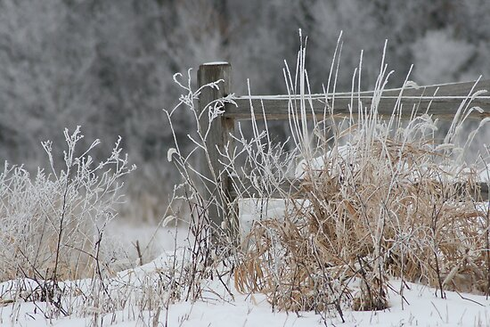 Rustic Fence In The Snow by Linda Busby