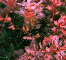 A Delicate Web by vigor