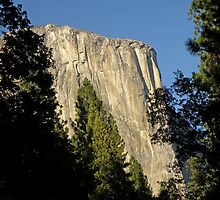 Through the Trees ~ El Capitan by Patty Boyte
