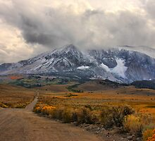 Into the Sierras by Barbara  Brown