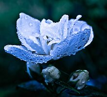 Dew drops in the morning... by x- pose