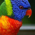 Red Eyes - Lorikeet Australia by PhoenixArt