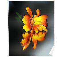 Daisy - (Colour Version) Poster