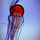 Jelly in blue by Susana Weber