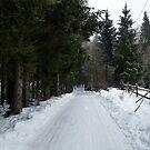 Winter Road in Sweden by HELUA