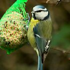 Feeding Blue Tit by Robert Abraham