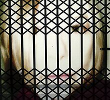 Behind Bars by PPPhotoArt