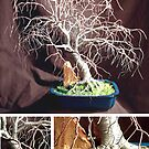 Hickory in Blue Base, wire tree sculpture by Sal Villano