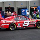 Dale Earnhardt Jr. NASCAR Budweiser by Chad Wilkins