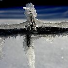 Ice and Good ol' BArbed Wire by Annie Muell