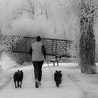 Winter Run by Kerri Gallagher