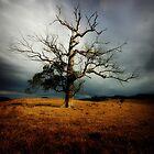 Treescape Rawdonvale by craigmason