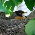 Pretty Bird by kaylaseeme