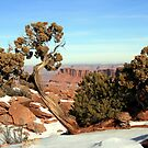 Canyonlands National Park from Overlook by Terence Russell