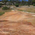 Yellowstone Pathway by lisaacs