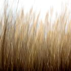 Tall Grass by Lynn Wiles