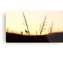 Hopping towards the setting sun Metal Print