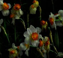 Daffodils 2 by Patito49