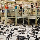 Boulders Beach - South Africa by Peter Wickham