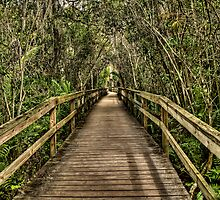 Fakahatchee Strand Preserve by David  Walker