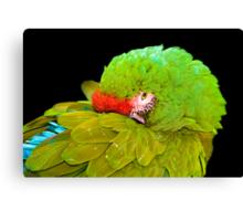 Military Macaw (Ara militaris) Canvas Print